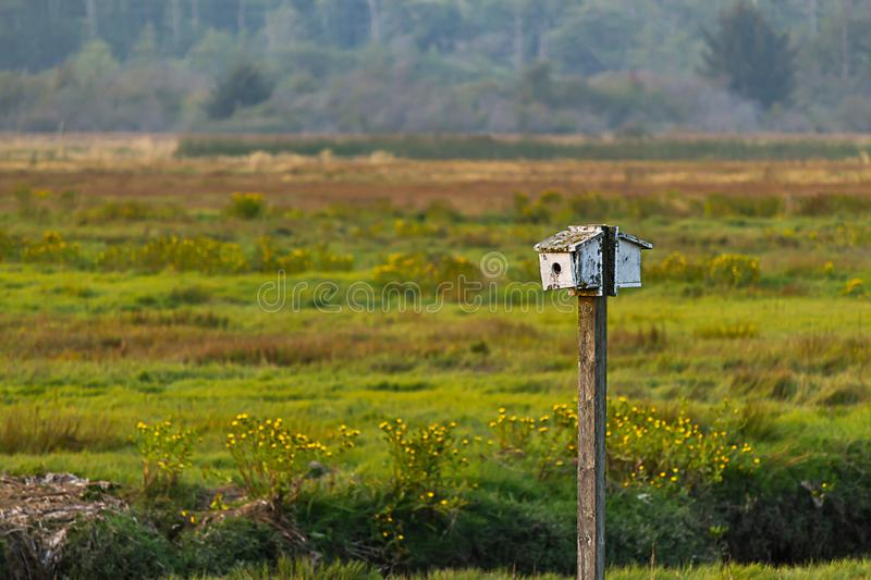 Small white bird house on a pole in colorful late summer field royalty free stock images