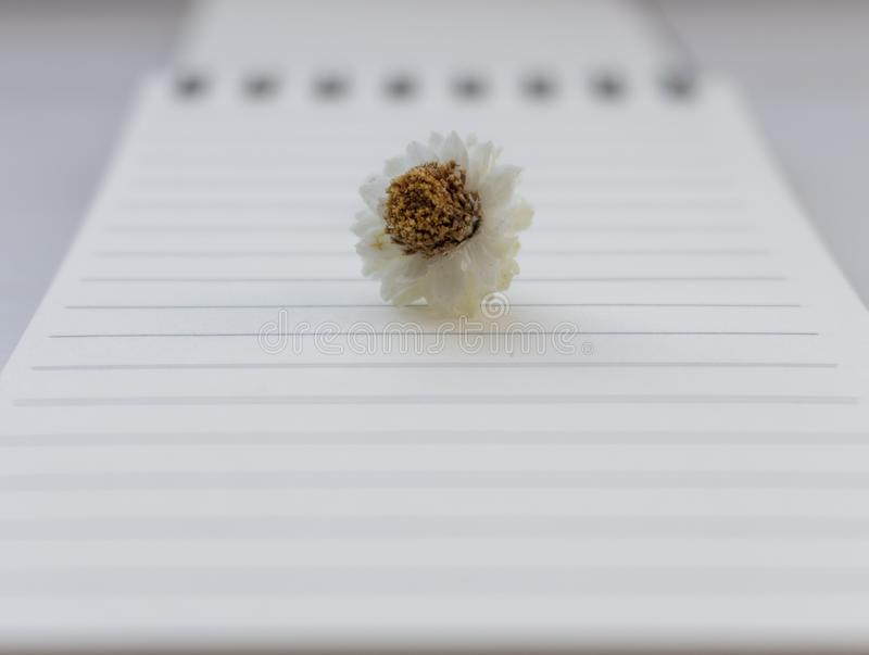 Small white camomile chamomile flower on open notebook with blank sheet unfocused background. Beginning and writing concept. stock photos