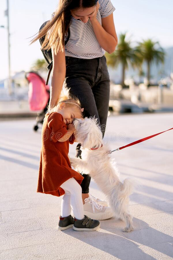 Free Small White Dog Is Licking A 2-year Old Girl`s Face Stock Photo - 202360290
