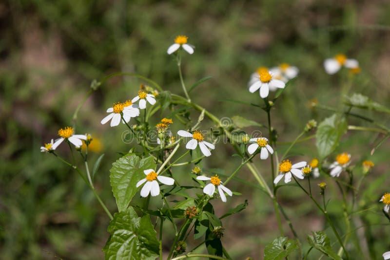 Small white flower stock image