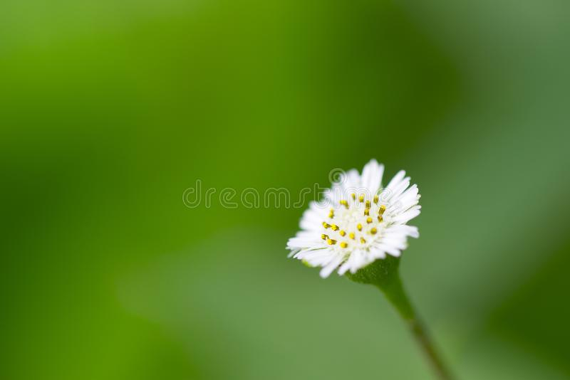 Small white flowers against a green background. royalty free stock images