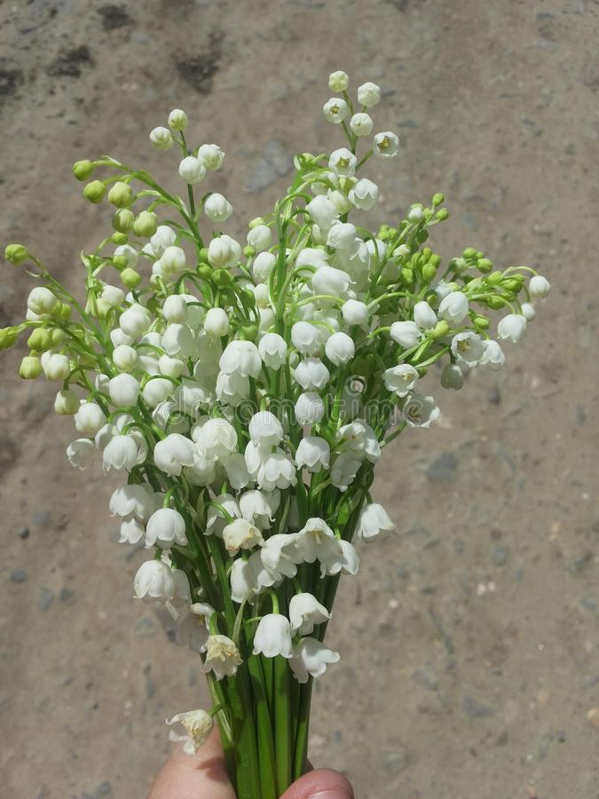 Small white flowers bouchet. Green and white royalty free stock photography