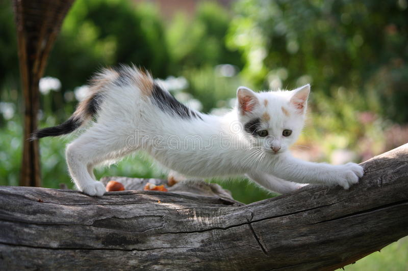 Small white kitten scratching tree branch stock photos