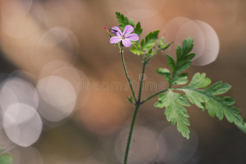 Download Small wild flower stock image. Image of grow, spring - 32175827