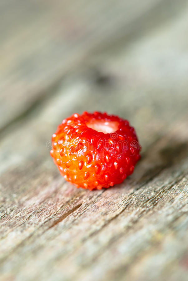 Small wild strawberry royalty free stock image