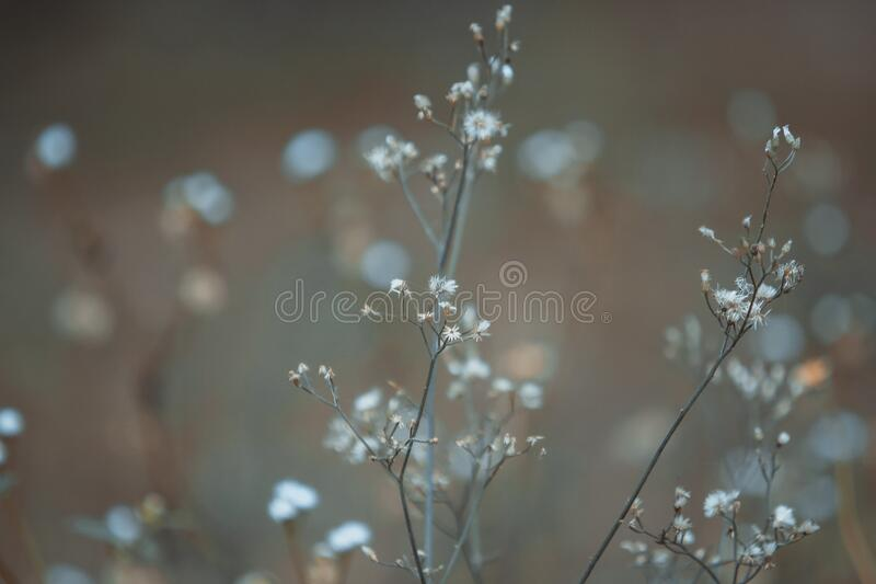 Small wildflowers royalty free stock image