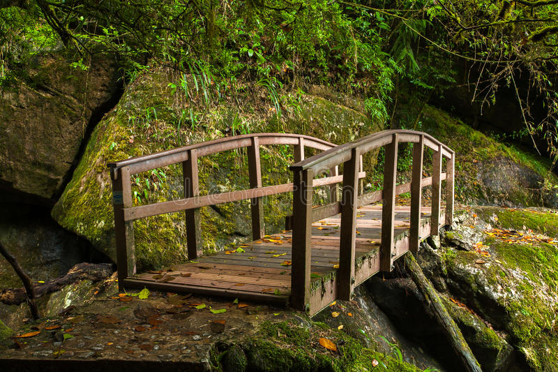 Small wood bridge. In rain forest royalty free stock photo