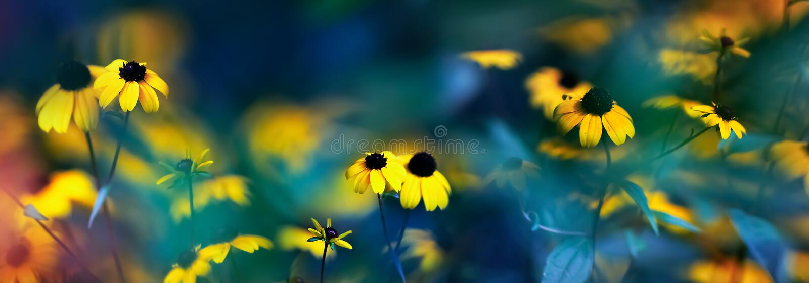 Small yellow bright summer flowers on a background of blue and green foliage in a fairy garden. Macro artistic image. royalty free stock image
