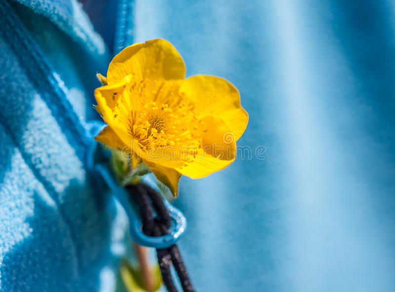 Small yellow flower in the buttonhole royalty free stock image