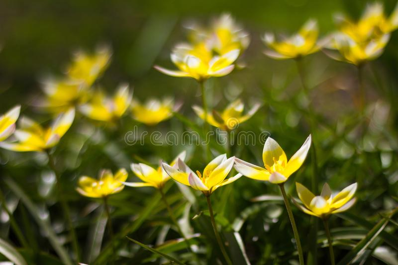 Small yellow flowers on flowerbed stock photo image of bright download small yellow flowers on flowerbed stock photo image of bright ball 116476996 mightylinksfo