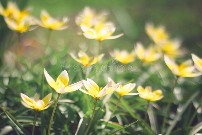 Small yellow flowers on flowerbed stock image image of ball download small yellow flowers on flowerbed stock image image of ball flower 116477003 mightylinksfo