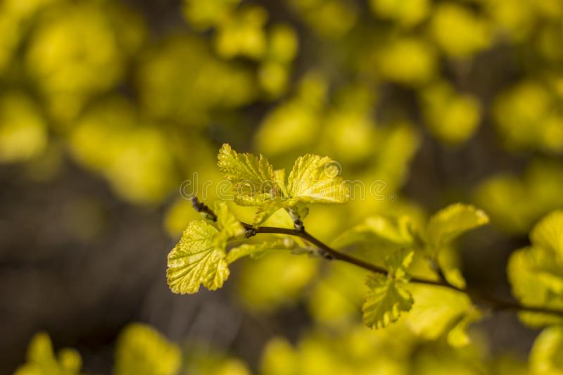 Small yellow leaves on a branch close up on a blurry background of bright flowers stock photos