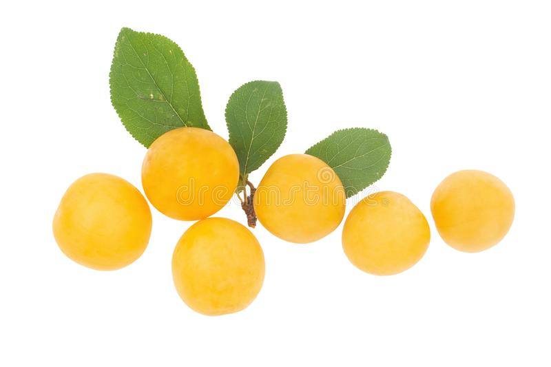 Small yellow plums, similar to Mirabelle. Heritage fruit. royalty free stock images