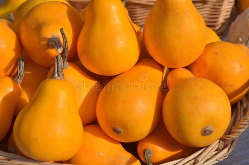 Small yellow pumpkins. Autumn harvest royalty free stock images