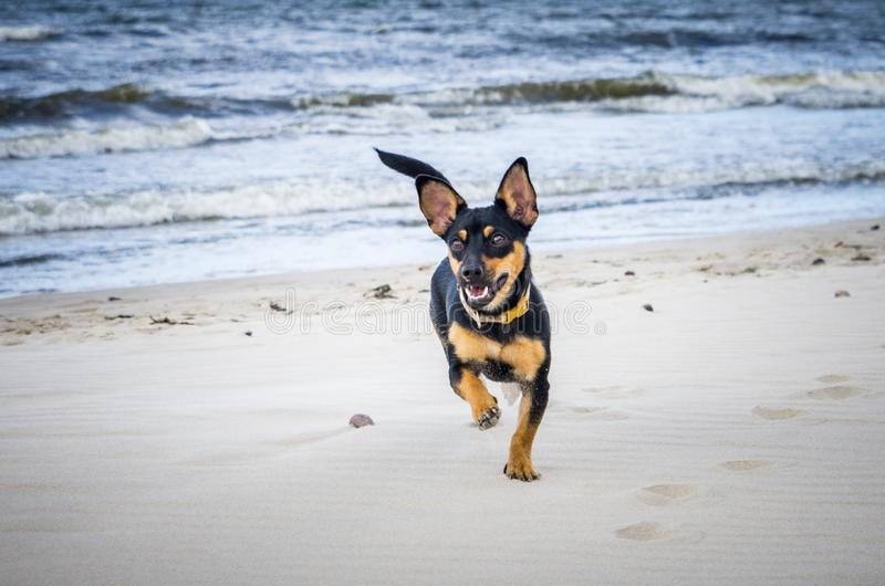Small young dog near water sea. Happy look royalty free stock photography