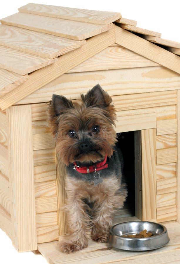 Smalldog com a casa de cão de madeira imagem de stock