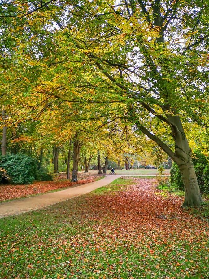 Smalle pathes in gouden de herfstpark in Berlijn royalty-vrije stock fotografie