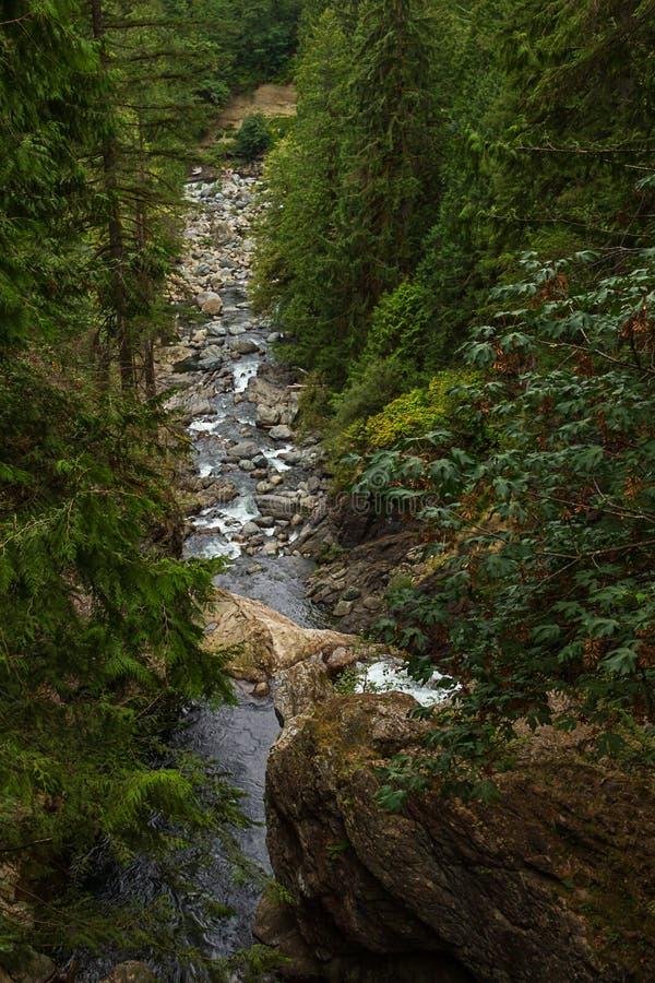 smalle rivierlooppas door vreedzaam noordwestenbos royalty-vrije stock fotografie
