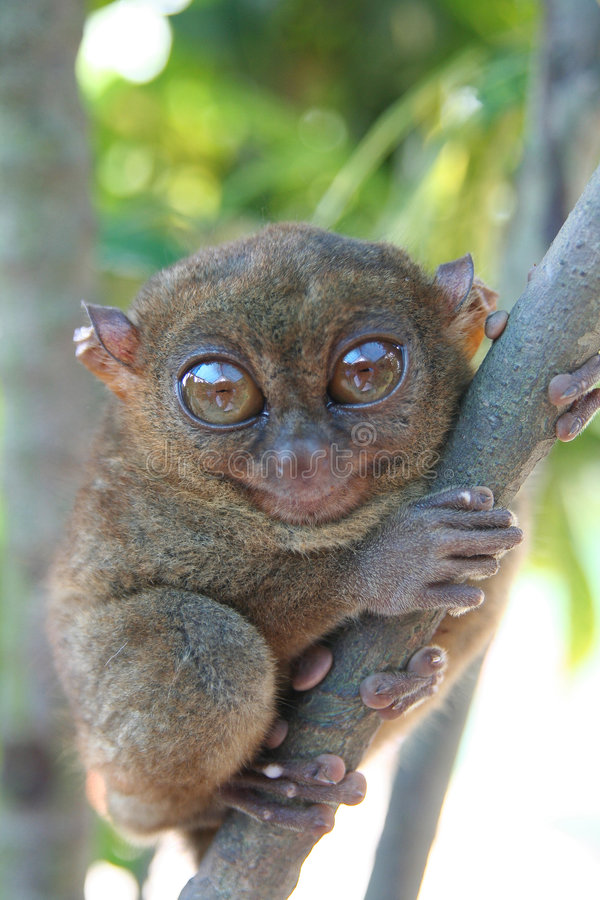Download The Smallest Primate stock photo. Image of monkey, hold - 8069170