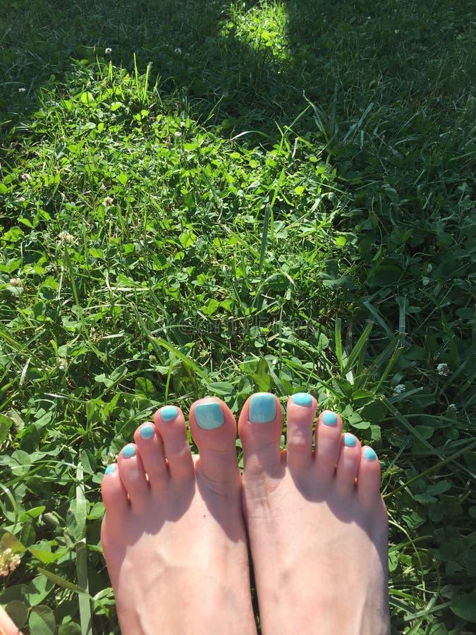 smalto della menta nell'erba verde fotografia stock libera da diritti