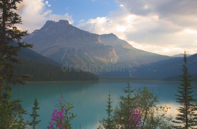 Smaragdgroen Meer door ochtendlicht stock afbeeldingen