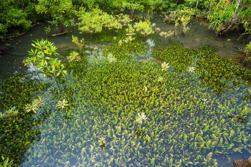 Smaragdgroene blauwe Pool Krabi, Thailand royalty-vrije stock foto's