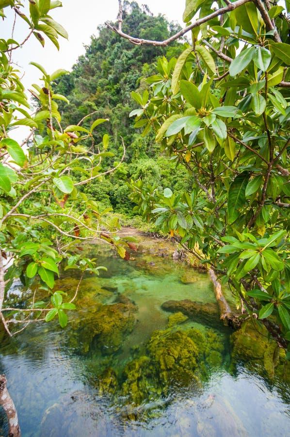 Smaragdgroene blauwe Pool Krabi, Thailand royalty-vrije stock fotografie