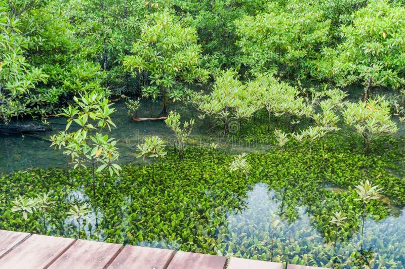 Smaragdgroene blauwe Pool Krabi, Thailand stock fotografie