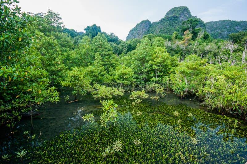 Smaragdgroene blauwe Pool Krabi, Thailand royalty-vrije stock afbeeldingen