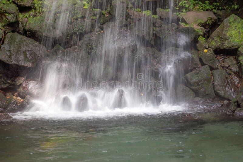 Smaragdgroene Pool, Dominica stock afbeelding