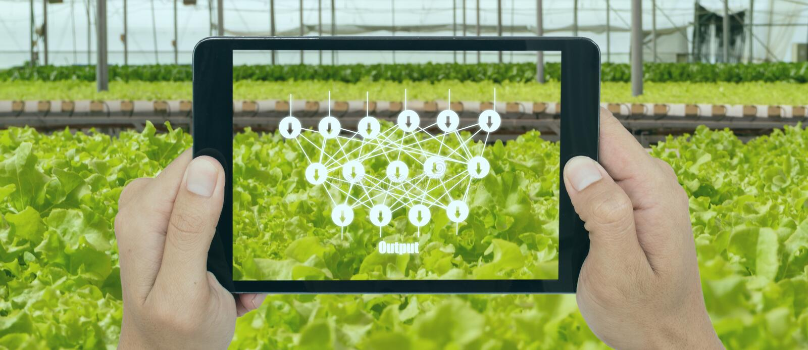 Smart agriculture with technoloty concept, farmer use deep learning with artificial intelligence to classification, regression, an. D clustering. In farming stock image