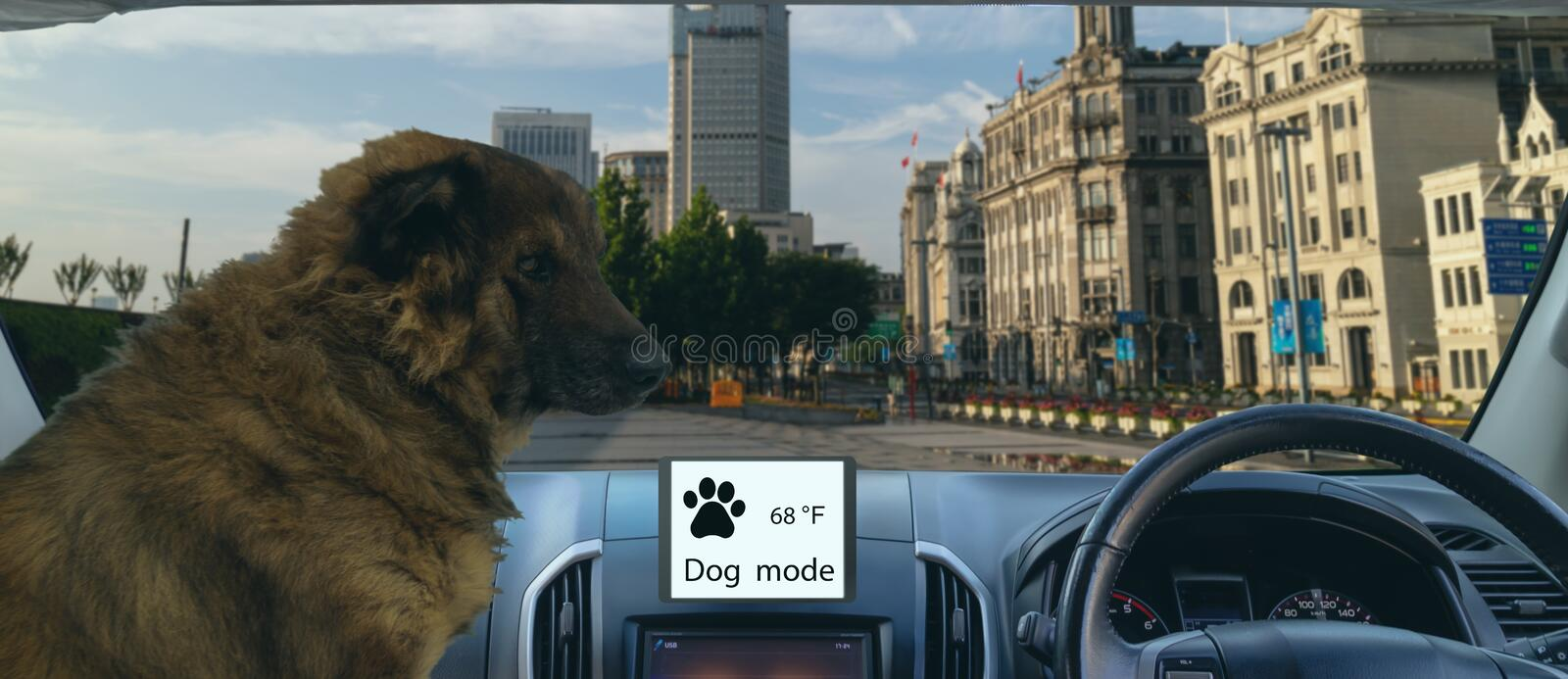 Smart autonomous car use dog and sentry mode to protect or guard the car and pet In addition to keeping the climate control on, th royalty free stock image