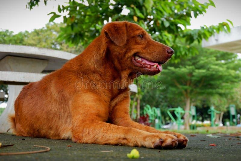 Smart brun hund som är bra och royaltyfri foto