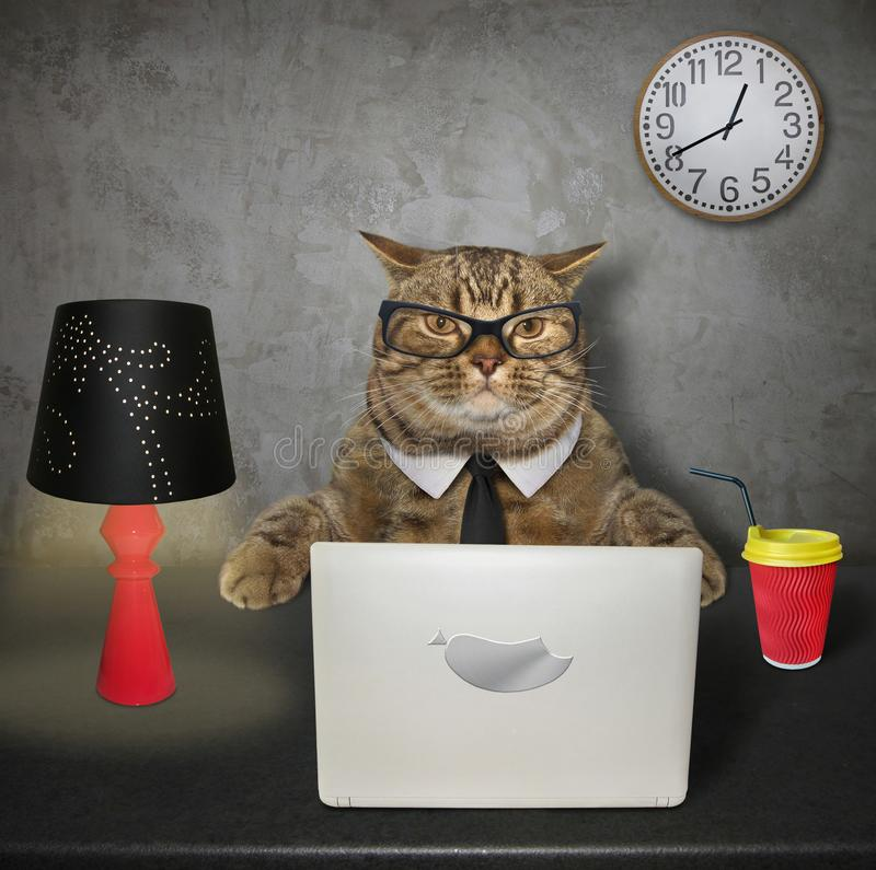 Cat works on the computer 2. The smart cat in glasses works on his computer at the table royalty free stock photo