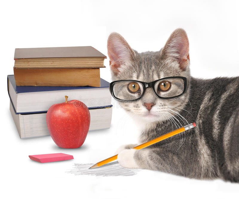 Smart Cat Writing with Books on White. A gray cat is holding a pencil with a scribble and books on a white isolated background for a training or humor concept