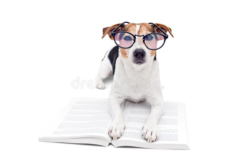 Smart cute dog lying with open book in eyeglasses stock images