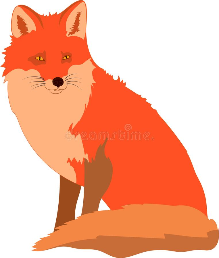 Smart cute red fox looking and paying attention royalty free stock image
