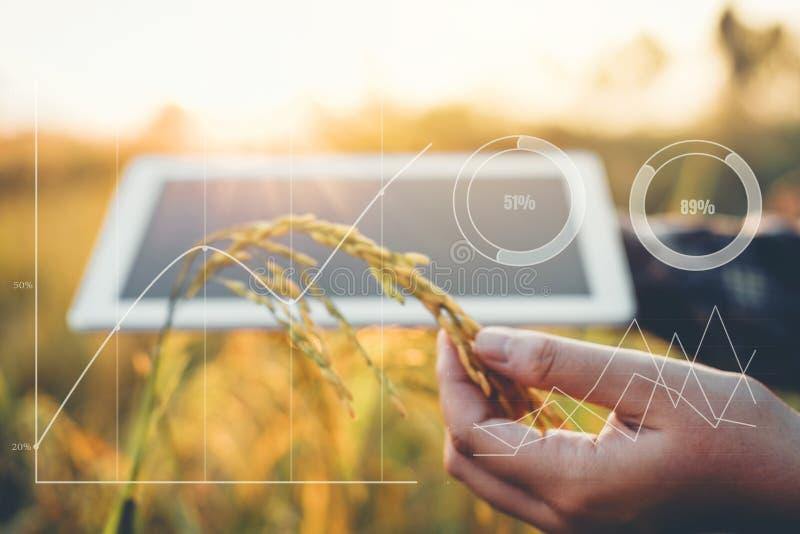 Smart die Landbouwtechnologie en biologische landbouw Wo bewerken royalty-vrije stock foto