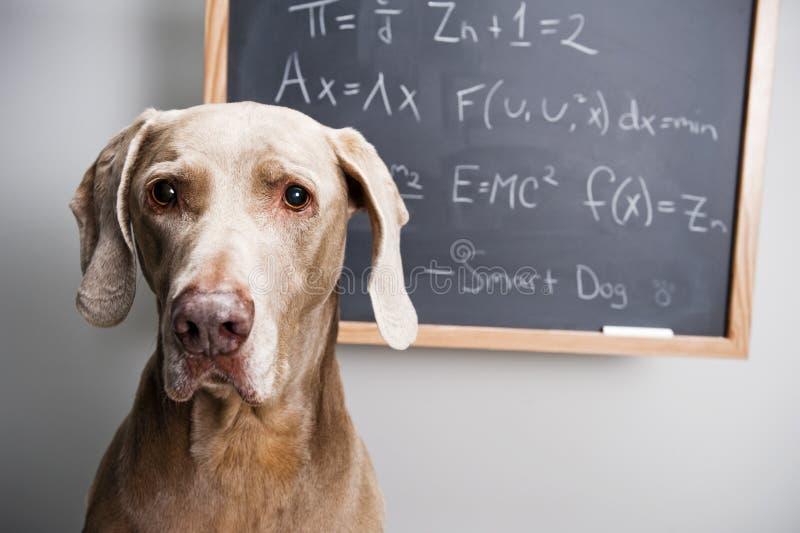 Smart dog royalty free stock photos