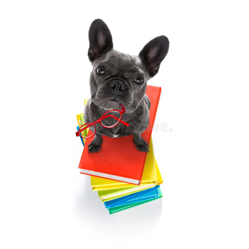 Smart dog and books royalty free stock photos