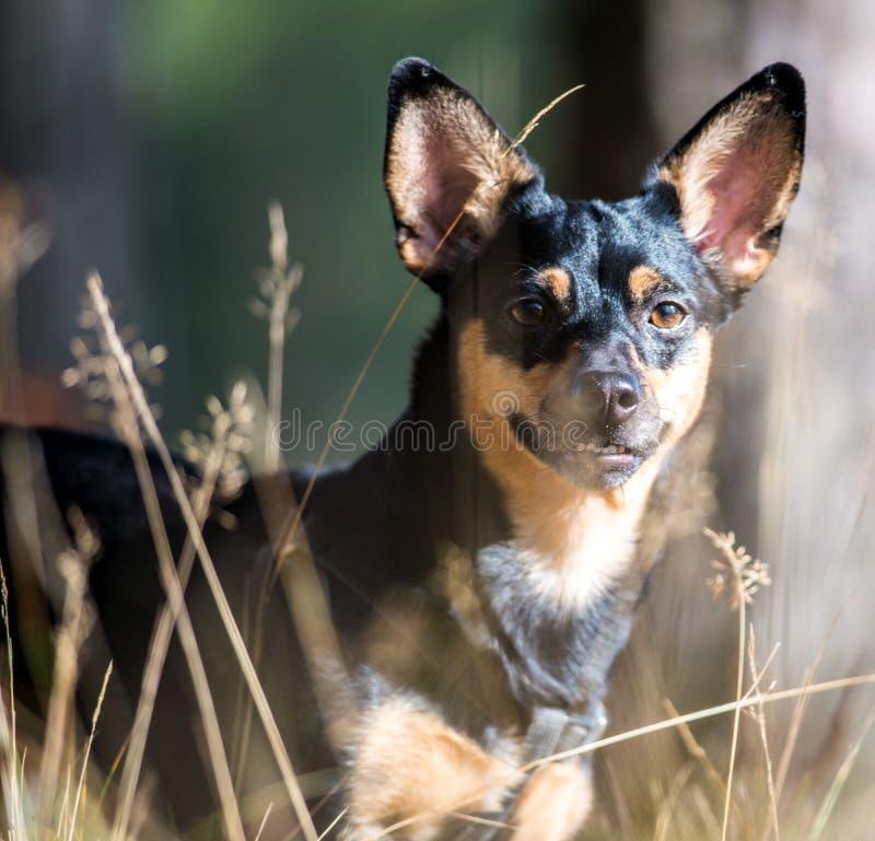 Smart dog look royalty free stock photos