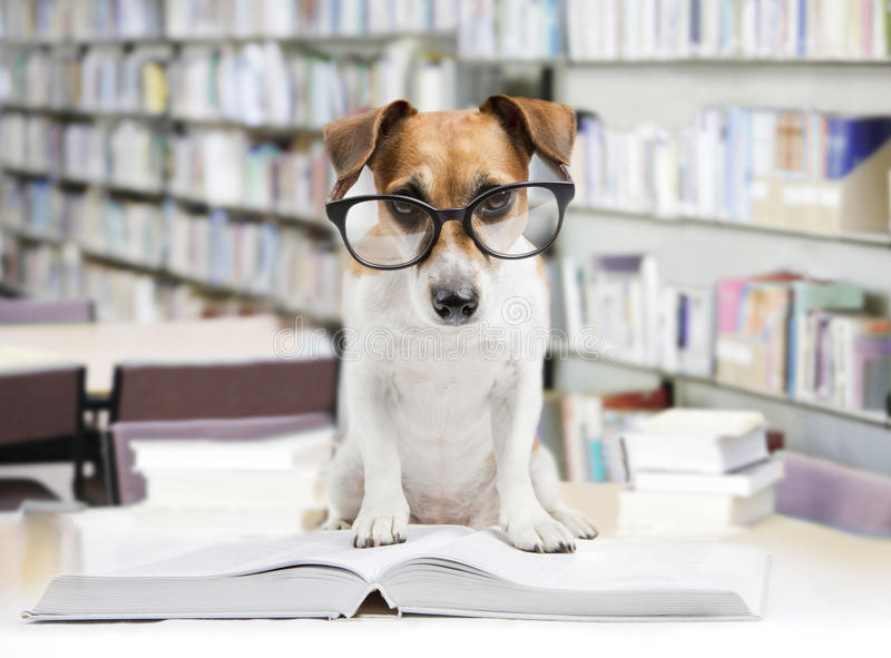 Smart dog reading book royalty free stock photo