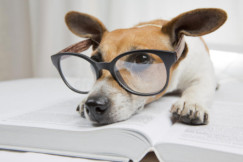 Smart dog reading book royalty free stock photo