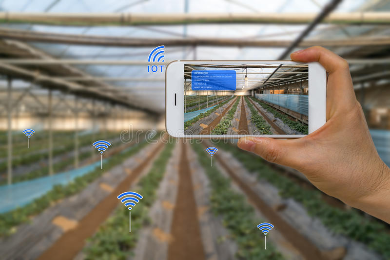 Smart Farming Agriculture Concept Using Internet of Things, IOT, and Augmented Reality, AR, and Smart Device royalty free stock image