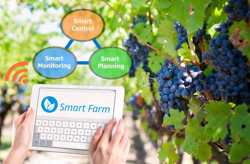 Smart farming, Hi-Tech Agriculture 4.0 royalty free stock image