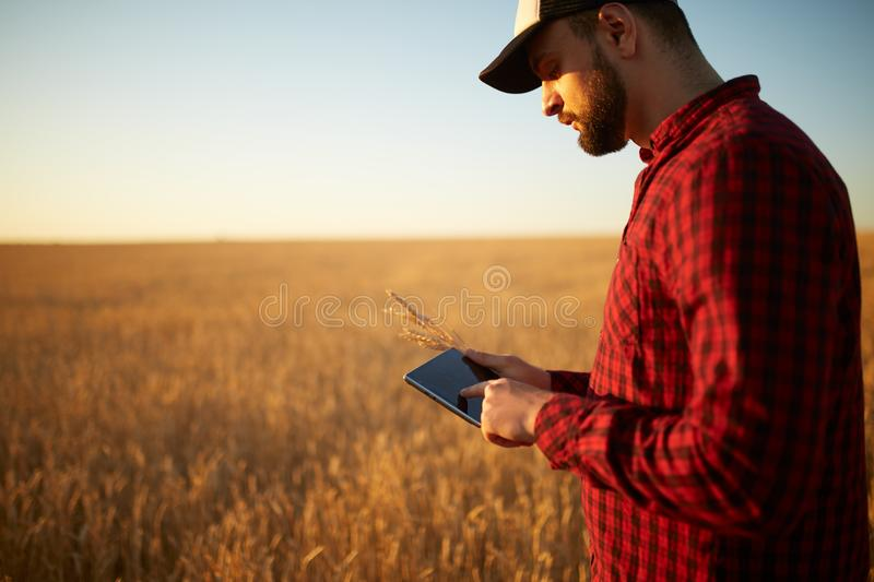 Smart farming using modern technologies in agriculture. Man agronomist farmer with digital tablet computer in wheat. Smart farming, using modern technologies in royalty free stock image