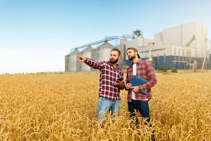 Smart lantbruk genom att använda moderna teknologier i jordbruk Man agronombonden med den digitala minnestavladatoren i vete royaltyfri fotografi