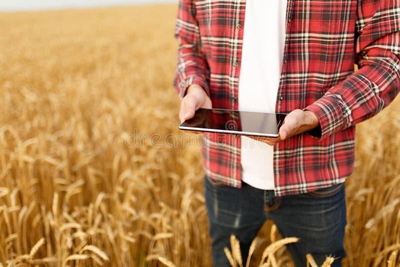 Smart lantbruk genom att använda moderna teknologier i jordbruk Man agronombonden med den digitala minnestavladatoren i vete royaltyfri bild
