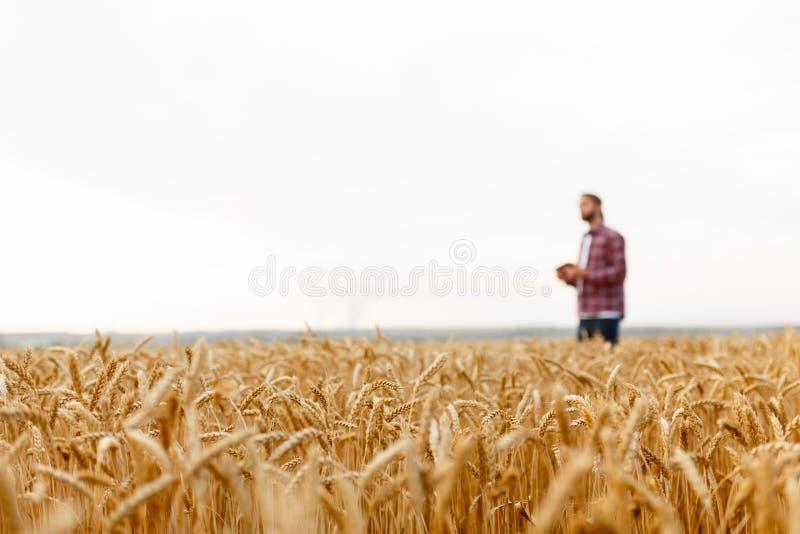 Smart lantbruk genom att använda moderna teknologier i jordbruk Man agronombonden med den digitala minnestavladatoren på bakgrund royaltyfria foton