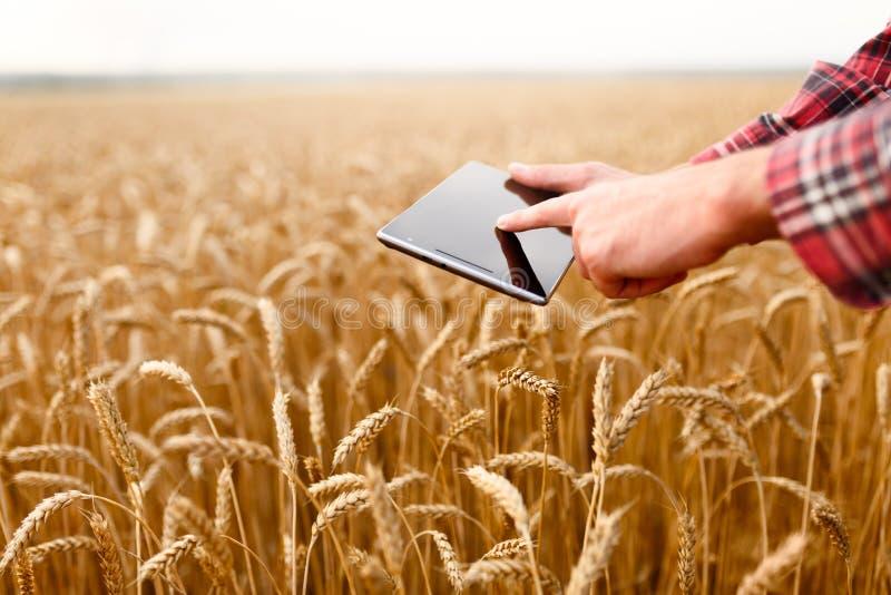 Smart lantbruk genom att använda moderna teknologier i jordbruk Man agronomen som bonden trycker på och nallar appen på digitalt arkivfoto